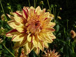 Kwiaty marmurkowe