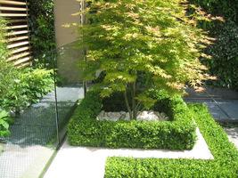 Ogród typu patio, podwójne ramki podkreślają urodę klonu palmowego (Chelsea Flower Show 2010)