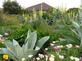 W ogrodzie w zgodzie z naturą rośliny swobodnie się wysiewają