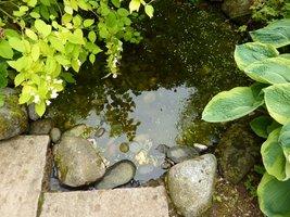 Kamienie ułożone na brzegu sadzawki posłużą jako schodki