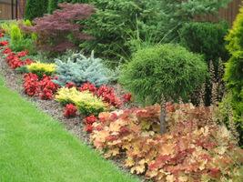 Żurawki można zestawiać z bukszpanami, iglakami czy ozdobnymi trawami, dodadzą rabatom koloru i podkreślą walory innych roślin
