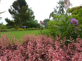 Dzwonkowate, drobne kwiatki, zebrane w delikatne wiechy, pojawiają się późną wiosną i latem.
