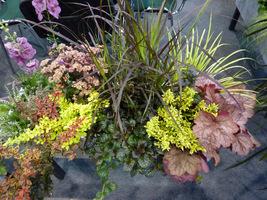 Kolejna propozycja żurawek z innymi roślinami w pojemniku