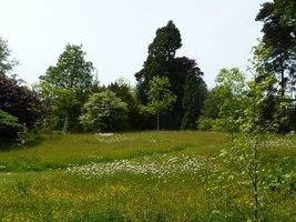Łąka kwietna mimo, że sztucznie założona przez człowieka, wygląda na naturalną