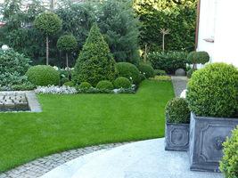 W moim ogrodzie lubię mieć bukszpany przy głównym wejściu