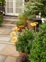 Na naszej liście zakupów mogą się też znaleźć krzewy liściaste, byliny, zioła i rośliny jednoroczne