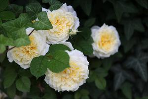 Ładny i zadbane rośliny sprawiają właścicielowi wielką przyjemność, może się nim także pochwalić, fot. Michał Młoźniak