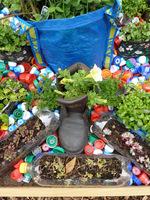 Warzywa rosną w torbie