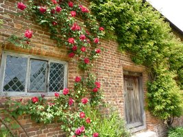 Po ścianach zamku wspinają się bujnie staromodne róże