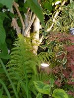 Światło może wyróżnić niektóre rośliny, kształt pni i urodę kory