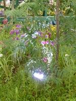 ... a także wydobyć urodę roślin po zmierzchu