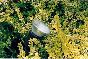 Światło ustawione odpowiednio może sprawić, że zobaczymy w ogrodzie tylko interesujące miejsca i ciekawe rośliny