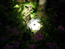 Mocny reflektor da dobre efekty