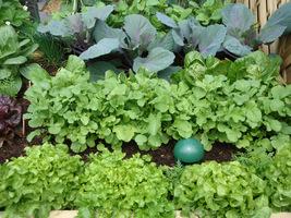 Dlaczego więc nie skorzystać z okazji i nie spędzić czasu z rodziną w warzywniku?