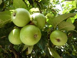 Jeśli działka jest niewielka, to dobrze jest posadzić rośliny o jadalnych owocach, karłową jabłoń, gruszę lub borówki amerykańskie