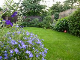 Rośliny ozdobne służą głównie podziwianiu i dekoracji, mogą też przyciągać motyle