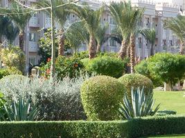 Hotelowy ogród ze strzyżonymi krzewami