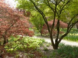 Miejsce sadzenia wiosennych kwiatów powinno być dobrze widoczne, w pobliżu ścieżek
