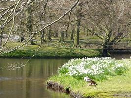 Ogromne, kwitnące łany kwiatów cebulowych mają bardzo duże znaczenie w naszym otoczeniu