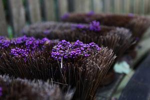 Fioletowe owoce pięknotki (Callicarpa) mogę jedynie pokazać w formie takiej oto ozdoby na szczotce, fot. Michał Młoźniak