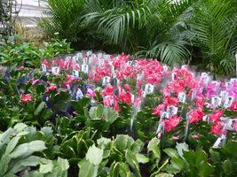 Jeśli chcemy nieco poczuć tropików, udajmy się do szklarni lub najbliższego ogrodu botanicznego