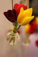 Śliczna dekoracja z ciętych tulipanów - do powieszenia w domu