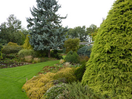 Zadbany i wielki ogród z iglakami w roli głównej