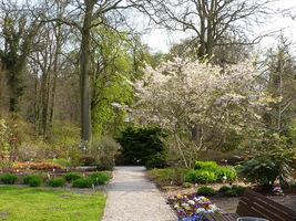 W ogrodzie zewnętrznym rośnie około 4000 taksonów, w tym 50 gatunków roślin zagrożonych w regionie Brandenburgii