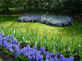 Podczas suchej wiosny rośliny jednak trzeba podlewać