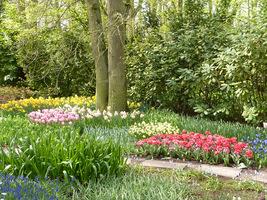 Kolorowe tulipany i inne rośliny cebulowe