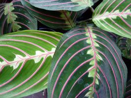 Przesadzamy rośliny doniczkowe do większych pojemników
