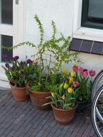 Przed naszym domem nie może też zabraknąć wiosennych donic z kwiatami cebulowymi