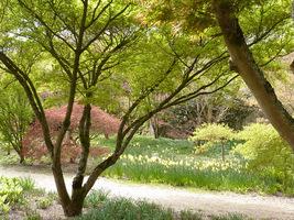 Można tutaj podziwiać ogromną kolekcję klonów, zarówno wiosną, kiedy pokrywają się świeżym listowiem, a jeszcze bardziej jesienią