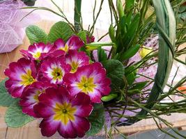 Galeria przybranych kwiatów na okazjonalne prezenty (Flora Point Anin)