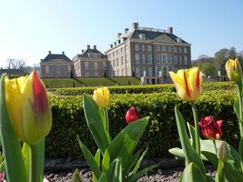 Widok na zamek z poziomu tulipanów