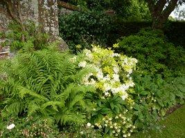 W tym ogrodzie po kolei zakwitają różne rośliny. Wiosną cebulowe, potem azalie, róże, zioła, rośliny jednoroczne i krzewy