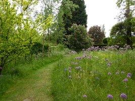 Ogród graniczy z laskiem. Na kwiatowej łące kwitną czosnki ozdobne