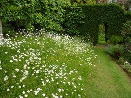 Kwiatowa łąka i tajemne przejścia