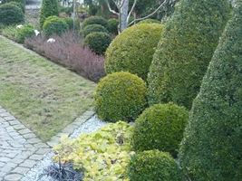 W marcu trawnik z reguły nie ma jeszcze zielonego koloru, lecz beżowy