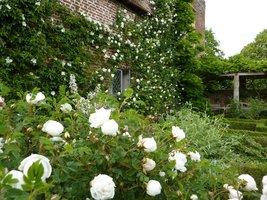 Białe roże w Białym Ogrodzie w Sissinghurst