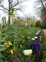 Szachownice błyszczą najbardziej wśród innych kwiatów cebulowych ze względu na urzekający wygląd