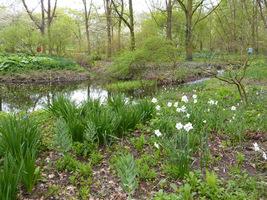 Wilgotne stanowiska, na których szachownice rosną w naturze, umiejscawiają je na brzegach zbiorników wodnych