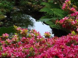 Różaneczniki uwielbiają miejsca w pobliżu wody