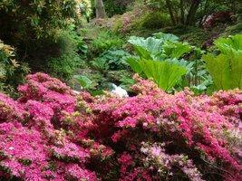 Exbury przypomina egzotyczną dżunglę