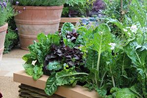Warzywa na ozdobnych, podniesionych rabatach