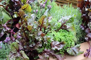 Kuchenny ogródek nie powinien mieć monotonnych grządek obsadzonych jednorodnymi warzywami