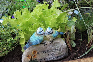 Wystarczy okazać trochę miłości i troski swoim roślinom, a one odwdzięczą się z nawiązką