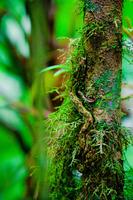 Wspaniała roślinność w stanie dzikim, fot. Dmitri Markine