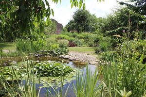 Wokół stawu stworzył się mikroklimat, przyjemnie tutaj posiedzieć i poobserwować przyrodę