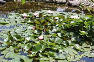 Piętrzące się wyspy grzybieni świadczą o doskonałych warunkach dla rozwoju roślin